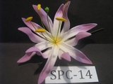 "4.3""  SPIDER LILY DOUBLE Curved PETALS FLOWER PICK-White w/ Purple Tips"