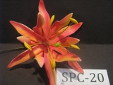 "4.3""  SPIDER LILY DOUBLE Curved PETALS FLOWER PICK-Sherbet Pink & Orange Stripes"