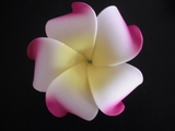 PLUMERIA FLOWER HAIR CLIP FUSHIA WHITE YELLOW