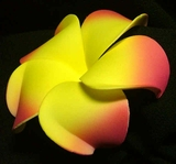 PLUMERIA FLOWER HAIR CLIP Yellow w/ Cerise Tips