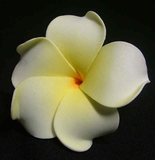 PLUMERIA FLOWER HAIR CLIP Natural White w/ Yellow Center & Red Hub