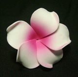 PLUMERIA FLOWER HAIR CLIP White w/ Deep Pink Center