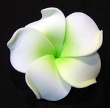 PLUMERIA FLOWER HAIR CLIP White w/ Green Center
