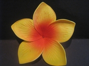 3.5  Inch Pointed Petal Plumeria PLU-B6- Yellow w/ Red Center