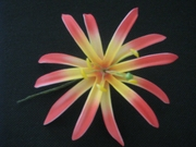 "4""  SPIDER LILY STRAIGHT DOUBLE PETALS FOAM HAIR PICK"