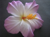 "3.5"" HIBISCUS FOAM FLOWER HAIR PICK-White w/ Purple Tips"