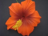 "3.5"" HIBISCUS FOAM FLOWER HAIR PICK-Orange"