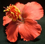 "3"" HIBISCUS FOAM FLOWER HAIR-Red"