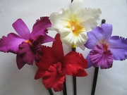 Cattleya Orchid Fabric Flower Wood Hair Stick Assorted Colors