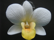 ORCHID FLOWER HAIR PICK White w/ Yellow Lip