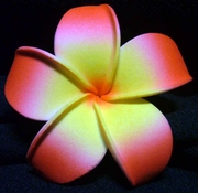 POINTED PETAL PLUMERIA FLOWER HAIR CLIP