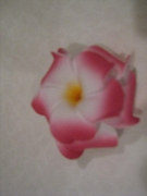 DOUBLE OLU- OLU FLOWER  PLUMERIA HAIR CLIP LARGE