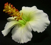 "3"" HIBISCUS FOAM FLOWER HAIR CLIP"