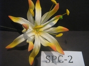 "4.3""  SPIDER LILY DOUBLE Curved PETALS FLOWER PICK-White w/ Orange Tips"