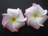 Mini Petals Plumeria Flower Clip Set  White w/ Pink Rims