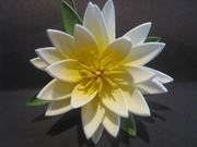 "3.5"" Lotus Flower w/ Lily Pad- White w/ Yellow Center"