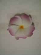 OLU  OLU FLOWER MEDIUM PLUMERIA  FOAM HAIR CLIP