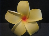 4 Inch Pointed Petal Plumeria Flower- Sunny Yellow