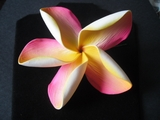 "5 "" POINTED PETAL PLUMERIA FLOWER HAIR PICK Yellow w/ Pink Stripes"