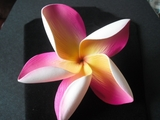 "5 "" POINTED PETAL PLUMERIA FLOWER HAIR PICK Yellow w/ Fushia Stripes"