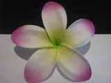 "5 ""STAR POINTED PETAL PLUMERIA FLOWER HAIR PICK White w/ Green Center & Purple Tips"
