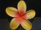 "5 ""STAR POINTED PETAL PLUMERIA FLOWER HAIR PICK Orange w/ Red Center"