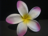 "5 ""STAR POINTED PETAL PLUMERIA FLOWER HAIR PICK White w/ Pink Tips & Yellow Center"