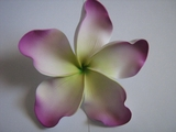 "6 "" Crinkled  Petals PLUMERIA FLOWER PICK- White w/ Purple Tips & Green Center"