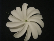 "4"" DOUBLE PETALS TAHITIAN GARDENIA TIARE FLOWER HAIR  PICK"
