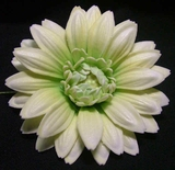 GERBERA DAISY FOAM FLOWER CLIP-White w/ Green Center