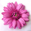 GERBERA DAISY FOAM FLOWER HAIR CLIP-Shocking Pink