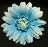 GERBERA DAISY FOAM FLOWER HAIR CLIP-Blue