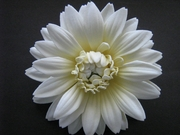 GERBERA DAISY FOAM FLOWER HAIR CLIP Natural White Yellow