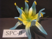 "4.3""  SPIDER LILY DOUBLE Curved PETALS FLOWER PICK-Yellow Center & Blue Tips"