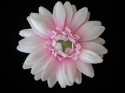 GERBERA DAISY FOAM FLOWER HAIR CLIP Light Mauve