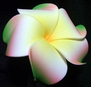 PLUMERIA FLOWER HAIR CLIP White w/ Red & Green Tips & Yellow Center