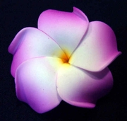 PLUMERIA FLOWER HAIR CLIP White w/ Purple Tips