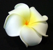 PLUMERIA FLOWER HAIR CLIP Natural White w/ Yellow Center