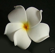 PLUMERIA FLOWER HAIR CLIP Natural White w/ Yellow Hub