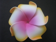 PLUMERIA FLOWER HAIR CLIP White w/ Pink Center & Orange Tips