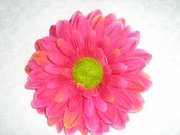 ROYAL GERBER DAISY FLOWER HAIR CLIP
