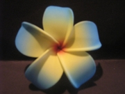 POINTED PETAL PLUMERIA FLOWER HAIR CLIP Yellow Center w/ Blue Tips & Red Hub