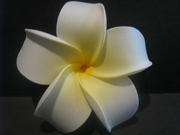 4 Inch Pointed Petal Plumeria Flower- White w/ Yellow Center