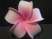 4 Inch Pointed Petal Plumeria Flower- White w/ Pink Center