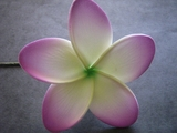 "3"" STAR POINTED PETAL PLUMERIA FLOWER HAIR PICK White w/ Green Center & Glowing Purple Tips"
