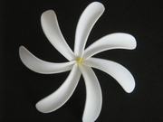 "4"" TAHITIAN GARDENIA TIARE FLOWER HAIR CLIP or PICK"