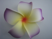 4 Inch Pointed Petal Plumeria Flower- White w/ Yellow Center & Purple Tips