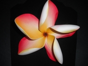 "5 "" POINTED PETAL PLUMERIA FLOWER HAIR PICK Yellow w/ Red Stripes"