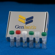 Reporter Vectors and Assay Kits