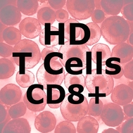 ImmunoPure™ HD T Cells CD8+